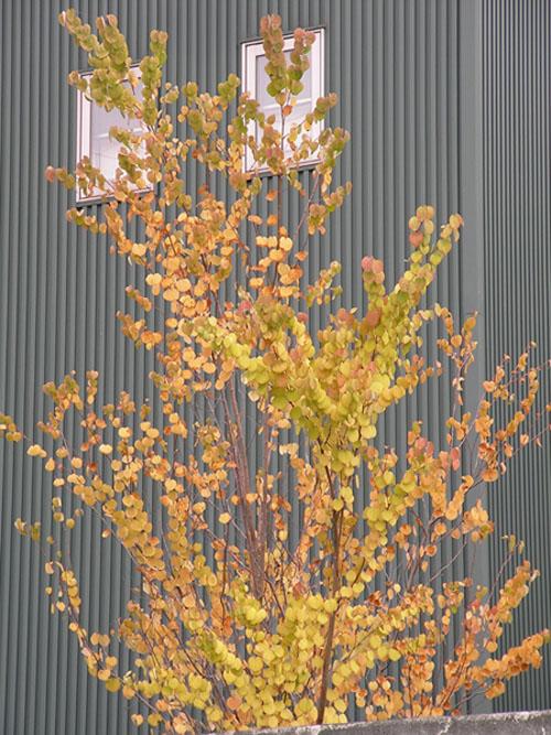 秋Ⅱ(紅葉)_f0045132_8174033.jpg