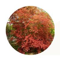 秋Ⅱ(紅葉)_f0045132_8183844.jpg