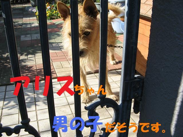 c0202659_20324327.jpg
