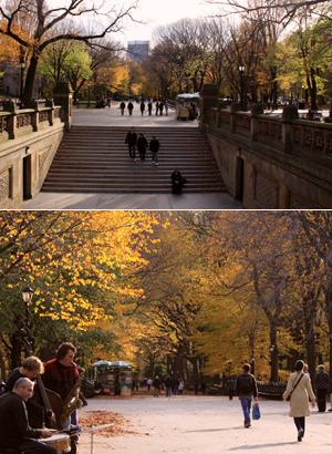 セントラルパーク最大の並木道、The Mallも紅葉 _b0007805_23504785.jpg