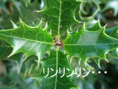 c0205806_197078.jpg