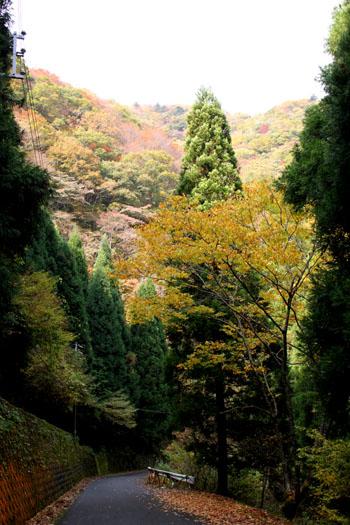 百井の渓へ_e0048413_21245256.jpg
