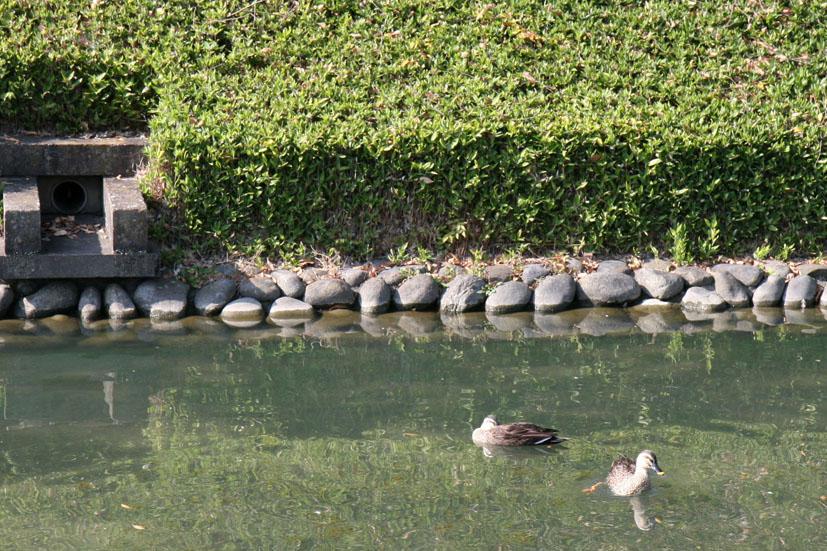 第7回 足利そば祭り 2011年10月29日(土)30日(日)_e0127948_19362186.jpg
