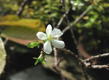 秋の花   亀梨さん_e0170562_10471665.jpg