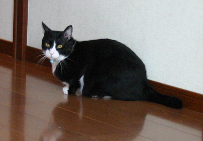 ロングデスク+ネコの○○○_f0171785_18245588.jpg