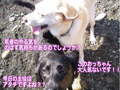 アンジーちゃんと バトル_b0145486_21114499.jpg