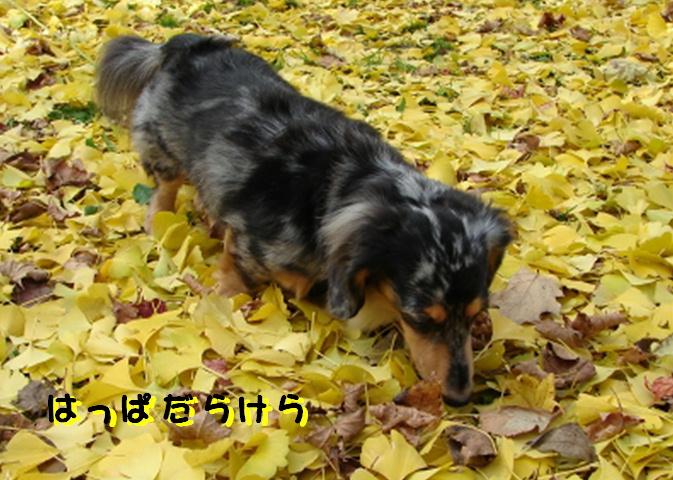秋 ばいばい_f0195891_14581452.jpg