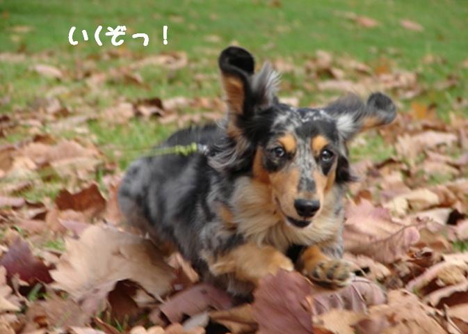 秋 ばいばい_f0195891_1502023.jpg