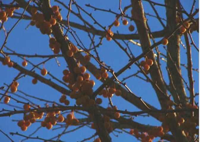 秋 ばいばい_f0195891_1532442.jpg
