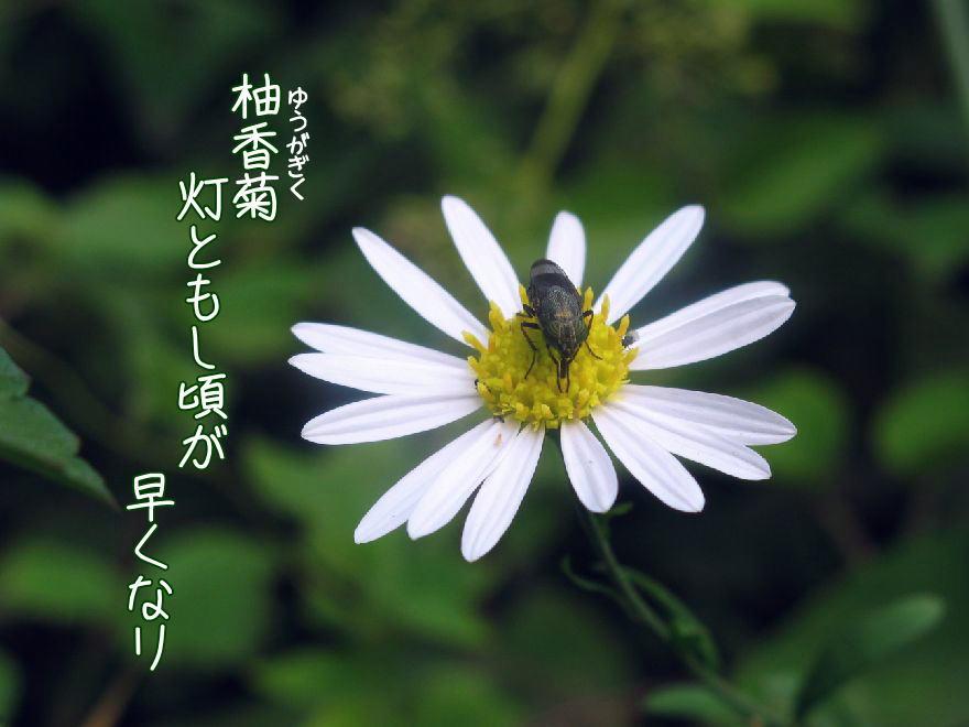 f0137096_15121684.jpg