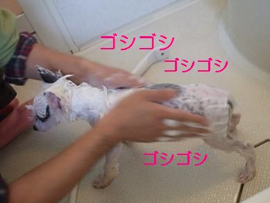 f0179203_1349226.jpg