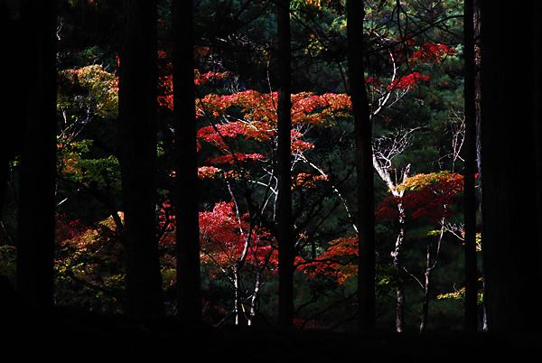 京都にて_d0127209_23104054.jpg