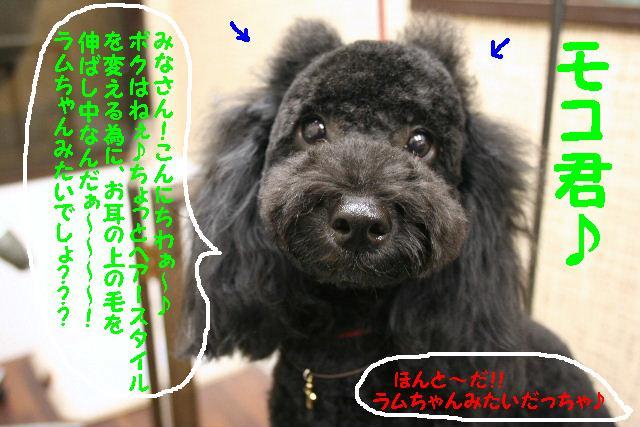 ラムちゃん&早くねぇ~!&さむ!!_b0130018_16433336.jpg