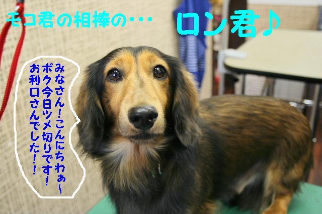 ラムちゃん&早くねぇ~!&さむ!!_b0130018_16454240.jpg