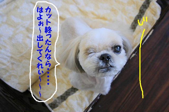ラムちゃん&早くねぇ~!&さむ!!_b0130018_16483990.jpg