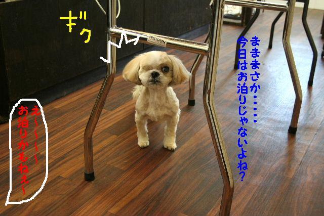 ラムちゃん&早くねぇ~!&さむ!!_b0130018_16495125.jpg