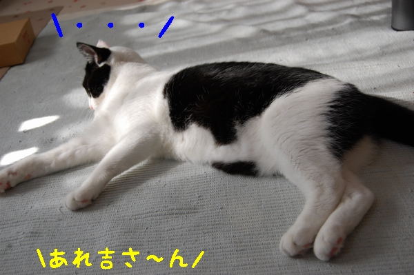 c0181639_182876.jpg