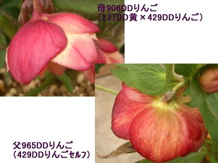 c0025140_1618856.jpg