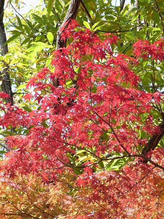 秋色の万博公園_b0017844_213229.jpg