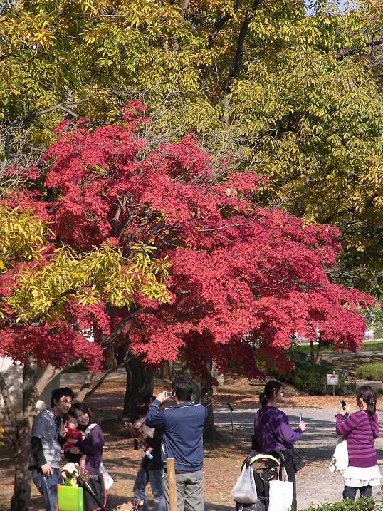 秋色の万博公園_b0017844_2132393.jpg