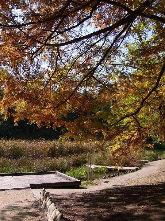 秋色の万博公園_b0017844_21333514.jpg