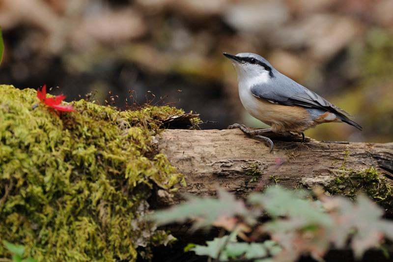 山の泉にて混群の野鳥たち_d0099854_18363021.jpg