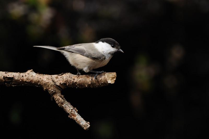 山の泉にて混群の野鳥たち_d0099854_1839177.jpg