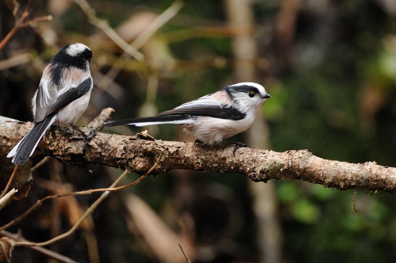 山の泉にて混群の野鳥たち_d0099854_18454366.jpg