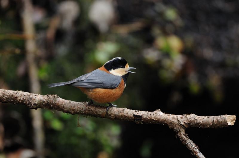 山の泉にて混群の野鳥たち_d0099854_1853840.jpg