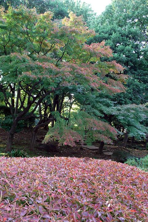 浦安(舞浜)、東京駅~日枝神社 (11/8)_b0006870_20472385.jpg