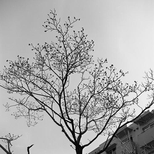 立冬の花水木_c0182775_195414.jpg