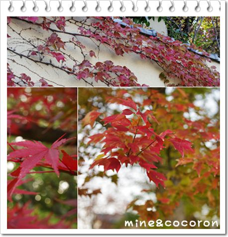 今日のお散歩_a0053987_2311146.jpg