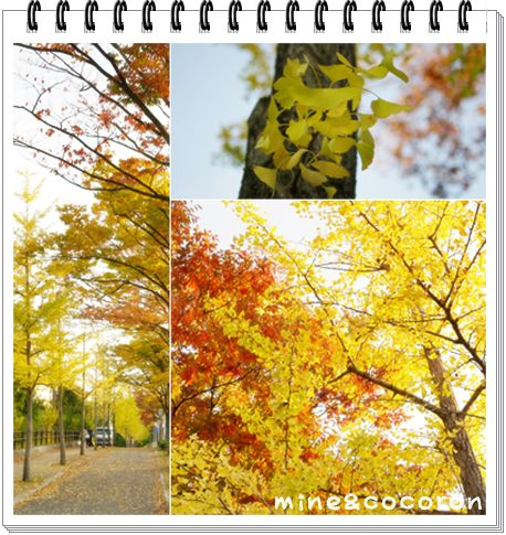 今日のお散歩_a0053987_2312623.jpg