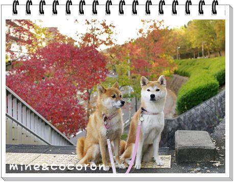 今日のお散歩_a0053987_2314921.jpg