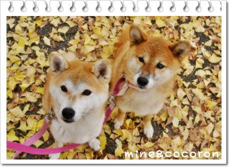 今日のお散歩_a0053987_232442.jpg