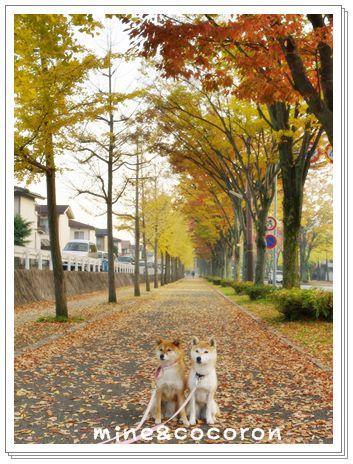 今日のお散歩_a0053987_233451.jpg