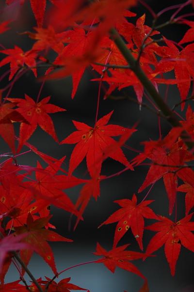 神護寺のライトアップ_e0051888_4385573.jpg