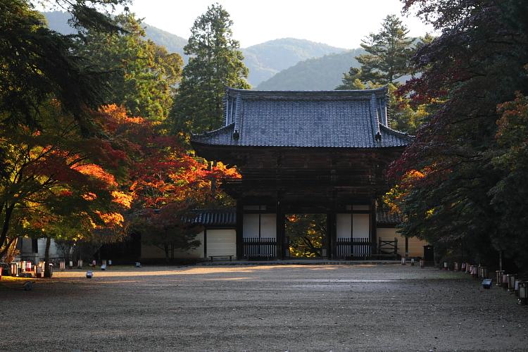 神護寺のライトアップ_e0051888_4391346.jpg