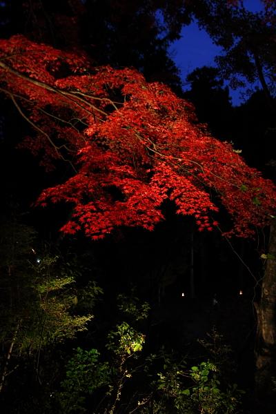 神護寺のライトアップ_e0051888_4435429.jpg