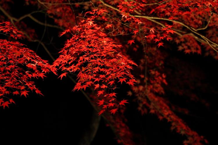 神護寺のライトアップ_e0051888_444436.jpg