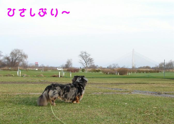 f0195891_19401211.jpg