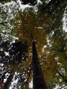 紅葉トレッキング(金剛山)&バームクーヘン作り体験!_e0111396_0502011.jpg