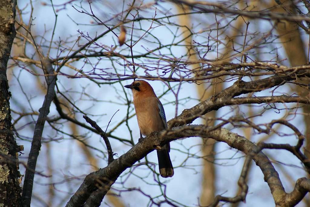 野鳥の撮影_f0138096_10441785.jpg