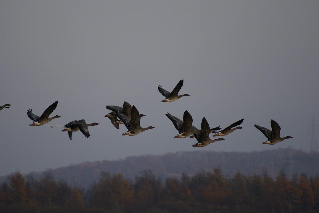 野鳥の撮影_f0138096_10452242.jpg