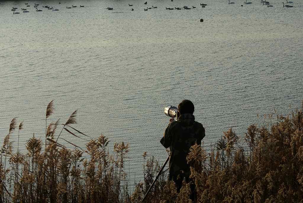 野鳥の撮影_f0138096_10455973.jpg