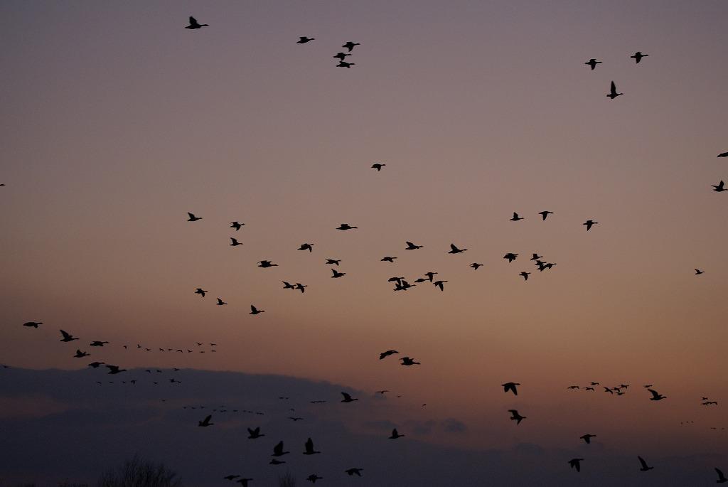 野鳥の撮影_f0138096_10462548.jpg