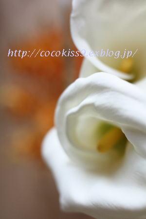 c0222097_1602680.jpg