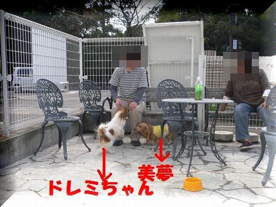 f0178701_1033834.jpg