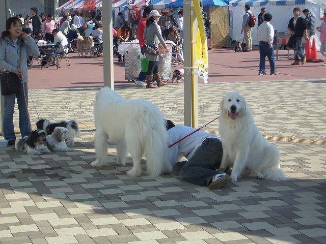 富士市発の新しいコンベンション「FDSC富士山ペットフェスタ」!_f0141310_23364670.jpg