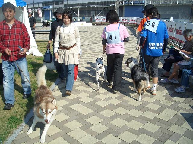 富士市発の新しいコンベンション「FDSC富士山ペットフェスタ」!_f0141310_23365782.jpg